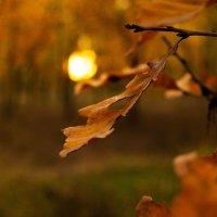 солнце на листье :: Влад