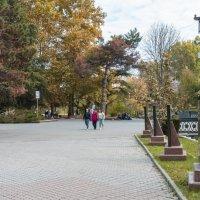 Осень в  парке :: Валентин Семчишин