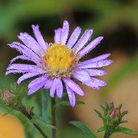 Последние цветочки :: Ninell Nikitina