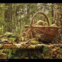 На болотах в лесу...... :: Елена Kазак