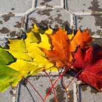 Осенняя палитра :: Дмитрий Бубер