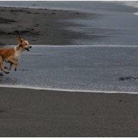 Бегущий по волнам :: Виолетта