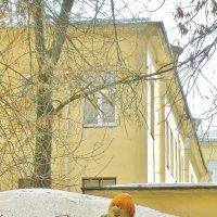 Карлсон,который живёт во дворе. :: Николай Васильев