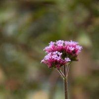 Цветок без названия :: Lyucia_Lyu Vasileva
