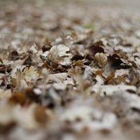 Дубовые листья :: esadesign Егерев