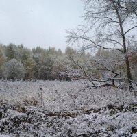 Сентябрь. Первый снег. :: Елена Бушуева
