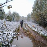 Прогулка. Первый снег. :: Елена Бушуева