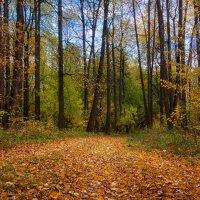 Никого не пощадила эта осень... :: Олег Косенко