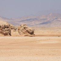 Песчаный лев :: Мария Зверева
