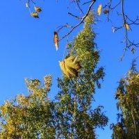 Осеннее дерево. :: Александр Лейкум