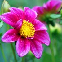 Цветы :: Александр Е
