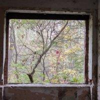 Осень и разруха :: Александр Морозов