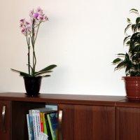 Орхидеи и еще что-то :: Виктория Пышненко