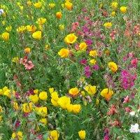 Лето... цветы.. :: aksakal88