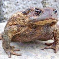 Ах какие губки,какие глазки...А все жаба,жаба :: Виолетта