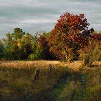 Деревенская осень :: Александр Русанюк