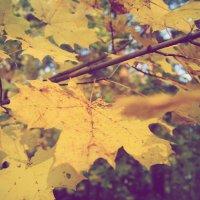 Осень :: Наталья ***