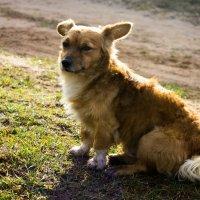 Пёс в осенних лучах солнца :: Арина Зотова