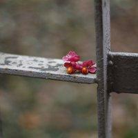 Выходной в Японском саду :: esadesign Егерев