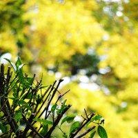 Жёлтые краски осени :: Вера Бойко