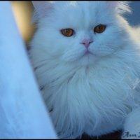 Cat :: Анюта Нечаева