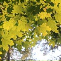 Осень :: Анюта Нечаева
