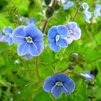 Цветы :: Victor Klyuchev