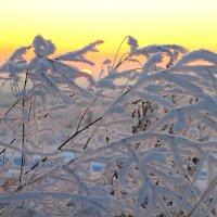 Морозный вечер. :: Victor Klyuchev