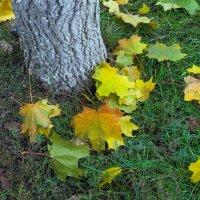 Листья под деревом :: Юрий Стародубцев