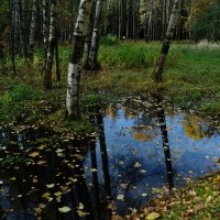 Осень в лесу... :: Andy Bayt