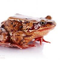 Царевна-лягушка ) :: Elya Vatel