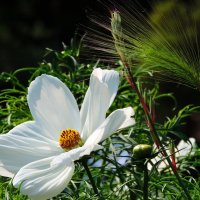 Beauty of summer :: Anna L