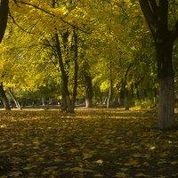 Осень в школьном дворе :: Вячеслав Харченко