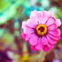 цветок осенью :: Вікторія Бєльська