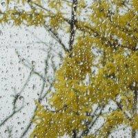 Весенний дождь похож на мятный коктейль с кубиками льда. Коктейль из весны, так напоминающий лето… © :: Оксана #