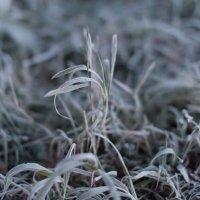 Первый мороз :: Дмитрий Николаев