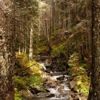 Карпатский лес, река Прут :: Владимир Коптев