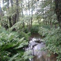 Рыбалка в лесу :: Richi Rowertu