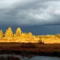 Перед дождём :: Денис Бугров