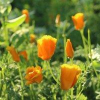 оранжевое лето :: annett Шерстяных