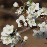 опыляем цветочки :: annett Шерстяных