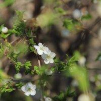 Весна :: annett Шерстяных