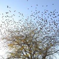 Вот так дерево... :: Юлия Викторовна