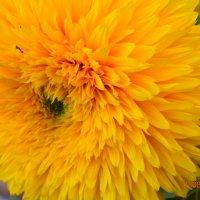 FLOWER :: Дарья Слащёва