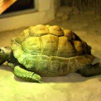 Черепаха :: Екатерина M