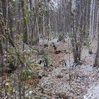 Первый снег :: Светлана Коровкина