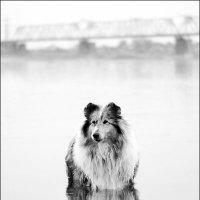 Утро на набережной :: Анастасия Бороздина