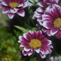bouquet :: Дарья Слащёва