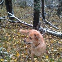 Сентябрь. Снег в лесу. :: Елена Бушуева