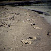 шаги по песку.... :: Ксения Трапезникова